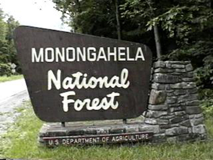 natural spruce regeneration in the Monongahela National Forest